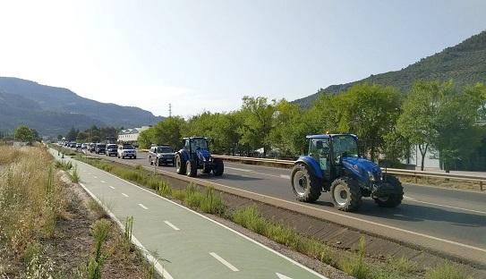 El PSOE respalda las movilizaciones del sector olivarero y destaca el incesante trabajo del Gobierno central con el olivar tradicional.