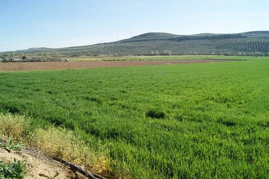 Las ayudas de Diputación para proyectos de agricultura y sostenibilidad facilitarán 45 actuaciones en la provincia.
