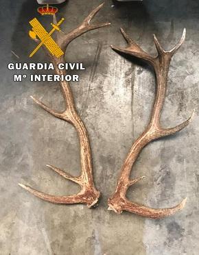 La Guardia Civil detiene a tres personas por el presunto robo de trofeos de caza en una finca agrícola.