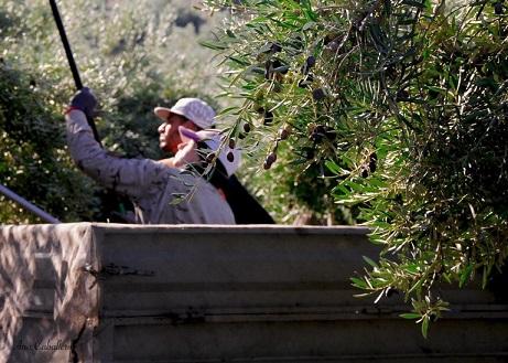 ASAJA-Jaén pide que se ponga fin de una vez a la injusta campaña de acoso y derribo contra el sector agrario.