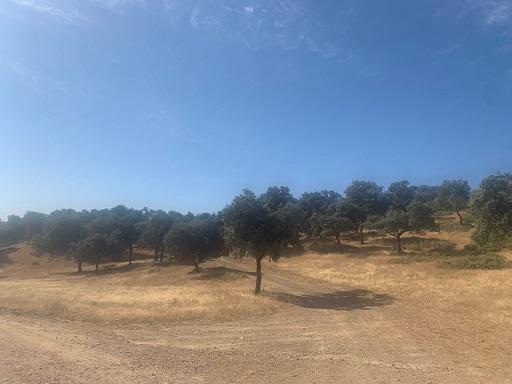 La Junta organiza actividades en espacios protegidos para difundir el gran patrimonio ambiental de Andalucía.