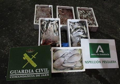 La Guardia Civil ha intervenido 33 Kilogramos de Pescado, no apto para el Consumo.