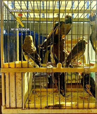La Guardia Civil investiga a una persona, como presunta autora de un Delito Contra la Flora y Fauna Silvestres.