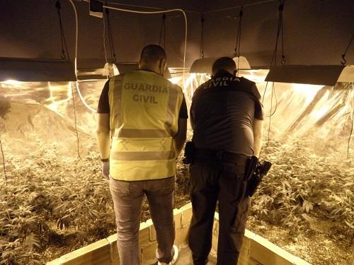 La Guardia Civil detiene a un vecino de Arjona por tener en su casa 161 plantas de marihuana.