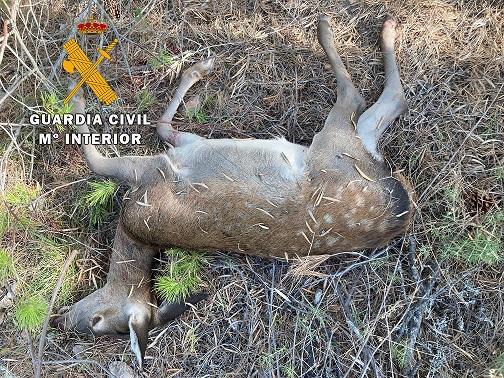 La Guardia Civil investiga a cuatro personas como presuntas autoras de un Delito Contra la Fauna Silvestre.