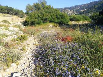 camping-aourir-gallery-flowers-in-the-dried-riverbed