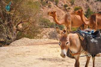 camping-aourir-morocco-outside-the-camping-28-2014