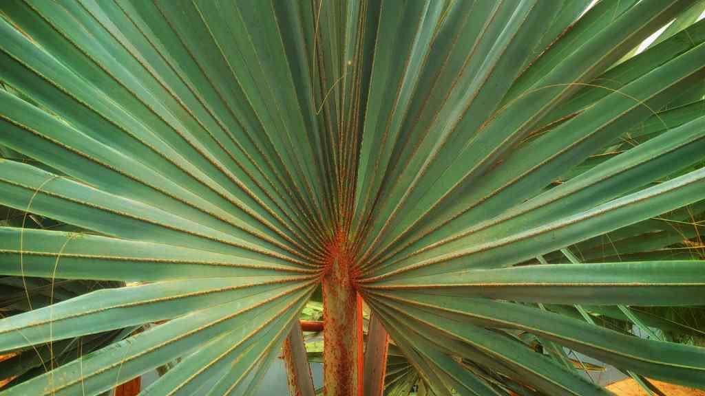 The botanical area in the CrocoParc Agadir