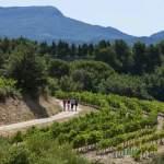 A la découverte des vignobles des Côtes du Rhône