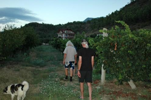 Besichtigung des Weinbergs
