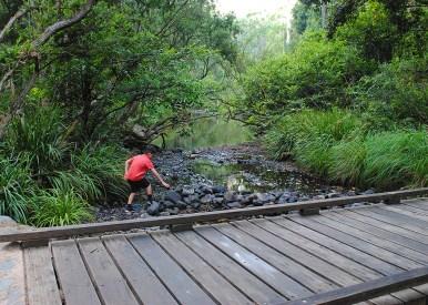 rock hopping — Little Yabba Creek