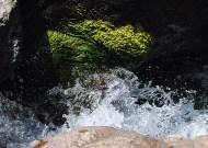 Rocky Hole - rock, water, plant