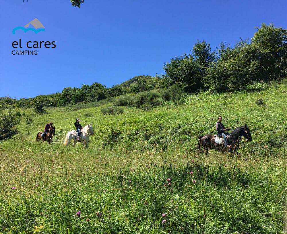 Caballos en Picos de Europa