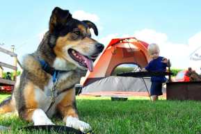 Health and Safety Tips for Camping With Your Dogs 2