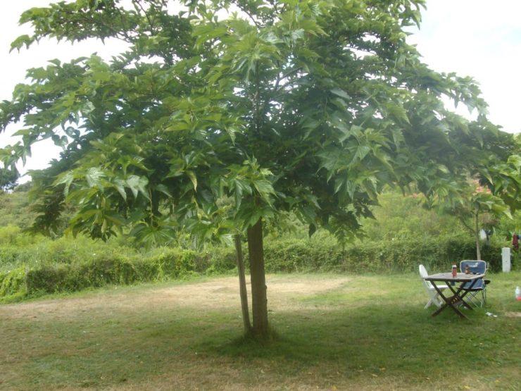 Emplacement 2 camping les amis de la nature Piriac