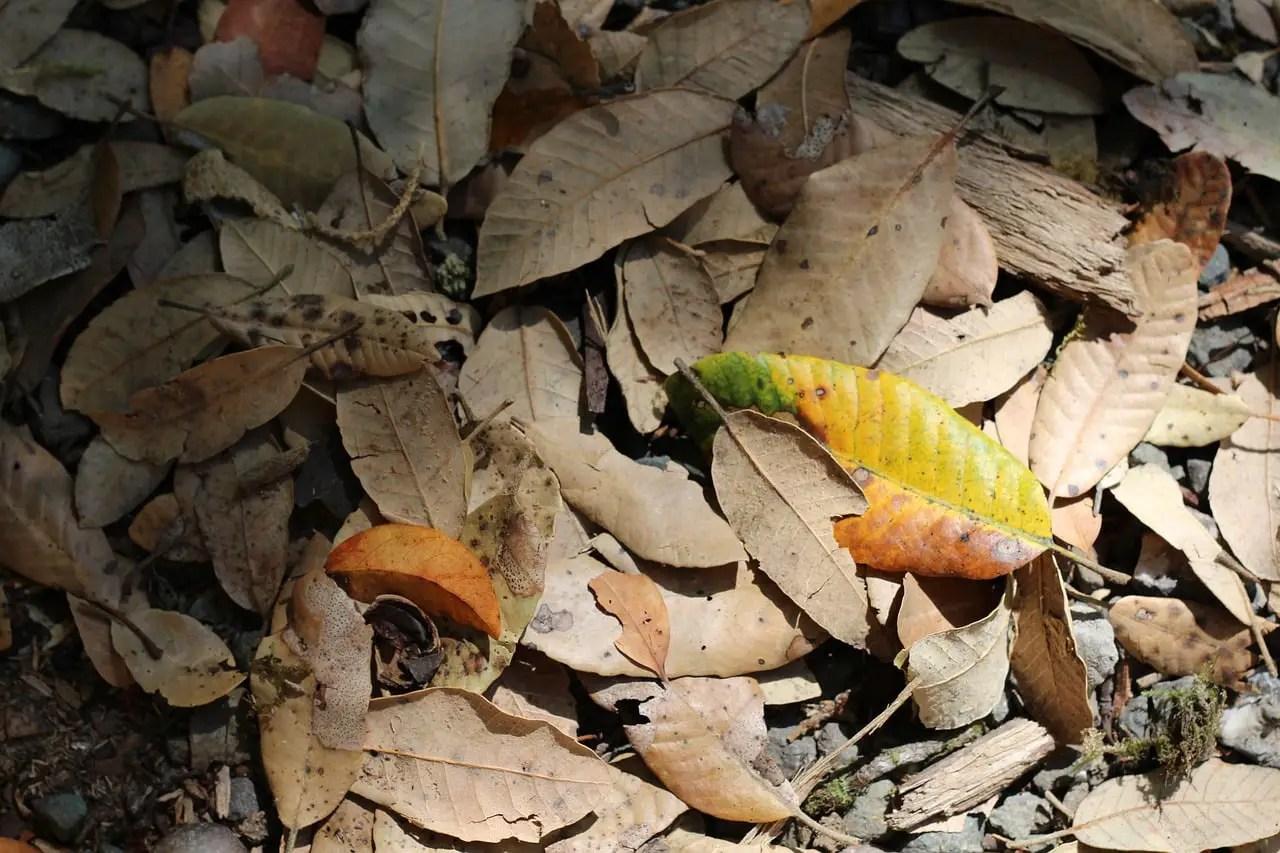 leaves on forest floor fall season