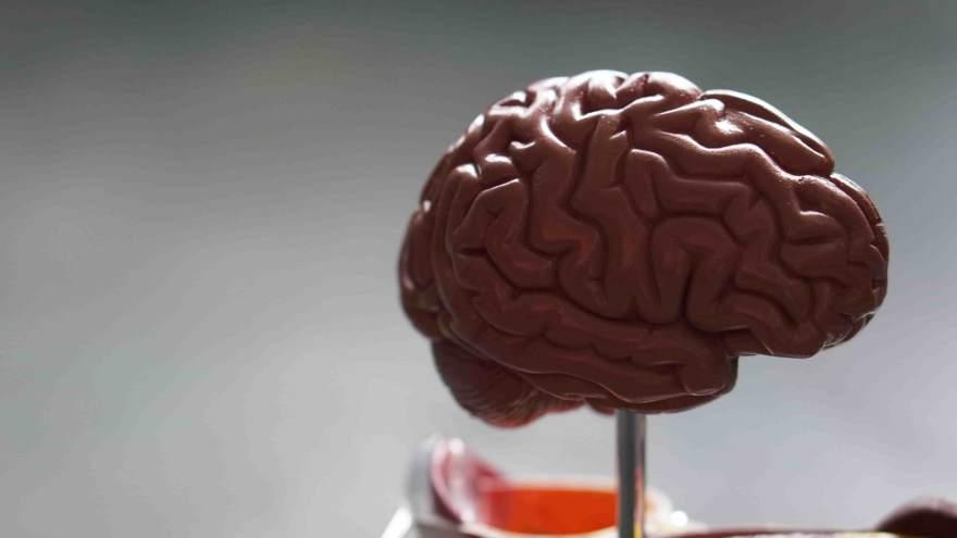 脳のクセ brain