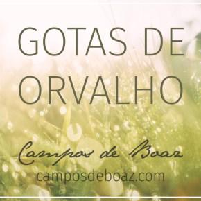 Gotas de orvalho (251)