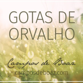 Gotas de orvalho (298)