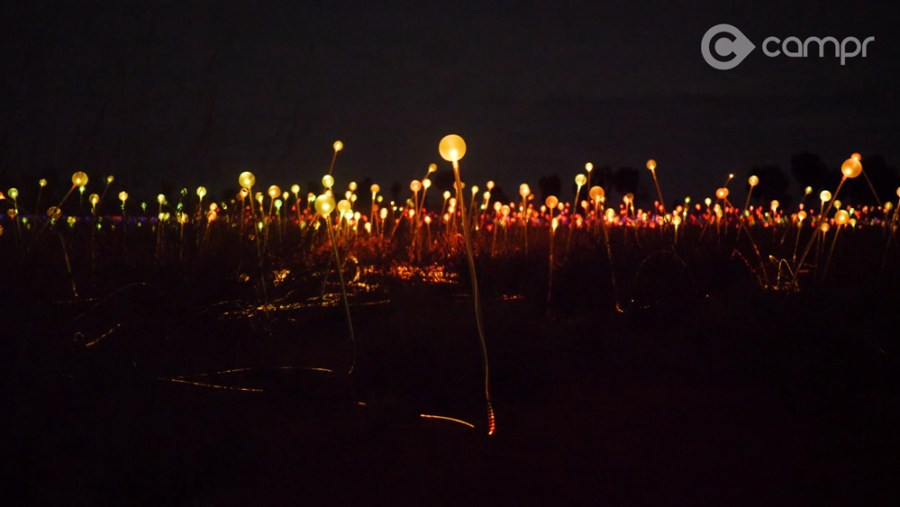 Field of Lights at Sound of Silence dinner