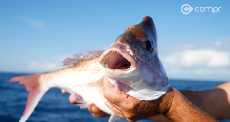 snapper fishing moreton island