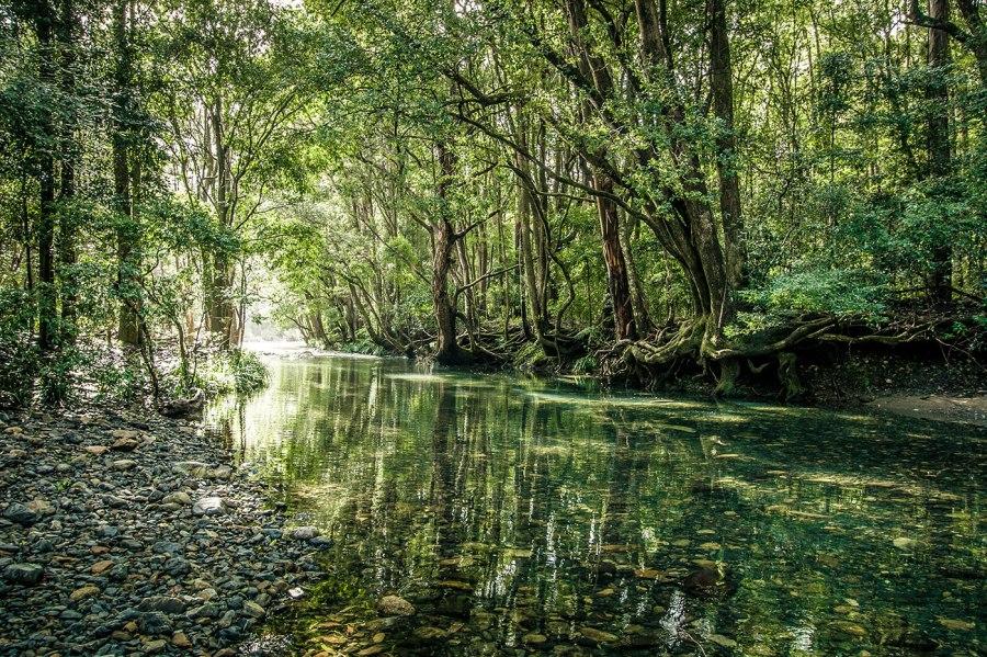 Never Never Creek in Bellingen