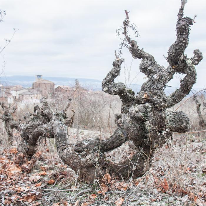 Vida salvaje alrededor del vino