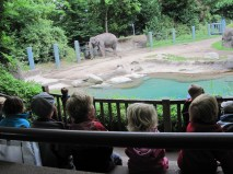 In awe of the elephant!