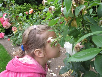 Bella loved smelling the roses in bloom.