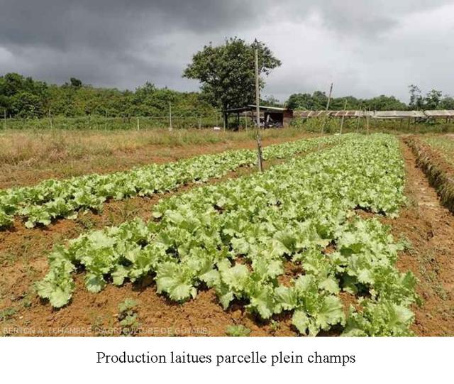 Production végétale CAPA ARC 2