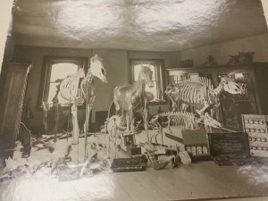 Veterinary Lab model room