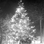 Christmas Tree in front of the Union, date unknown. Courtesy MSU Archives