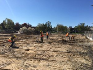 Shovel test survey in construction zone.
