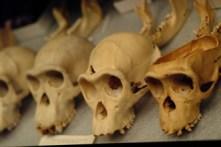 4Skulls