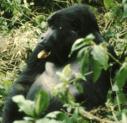 primate_2