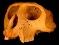 skull_3