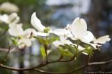 20120324-IMG_9917