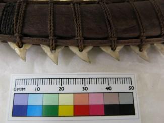 Close up of shark teeth