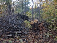 After the felling