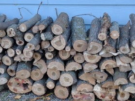 Another log pile