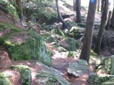 Woodland hike at Charleston Lake
