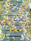 Leaves, Frontenac Park