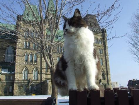 Photo of Fluffy - King of the Hill