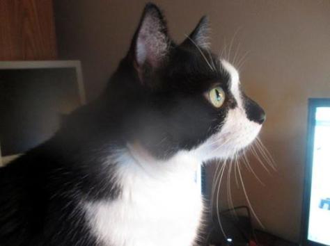 Photo of Jazzie watching TV