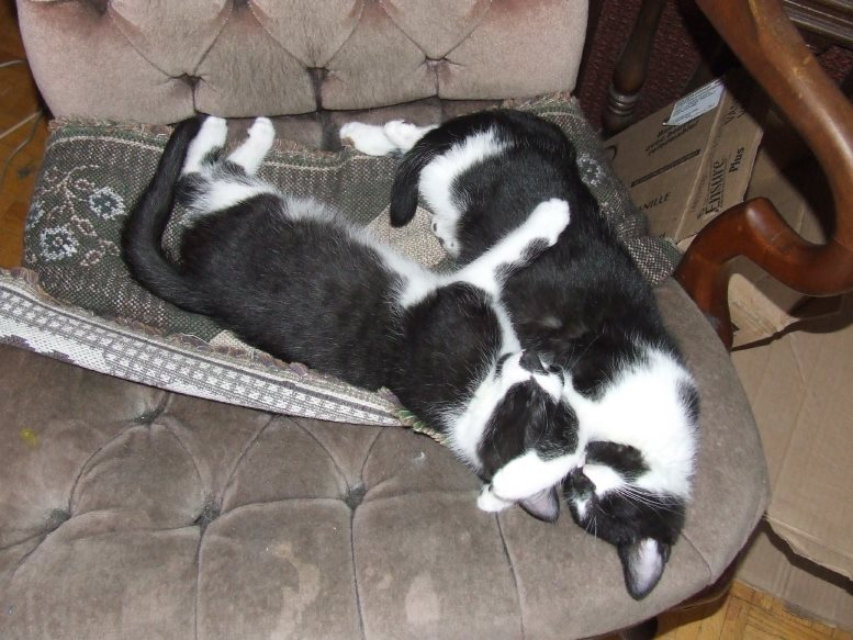 Jazzie and Isidore used to sleep together all the time.... (2010) - Klaus J Gerken