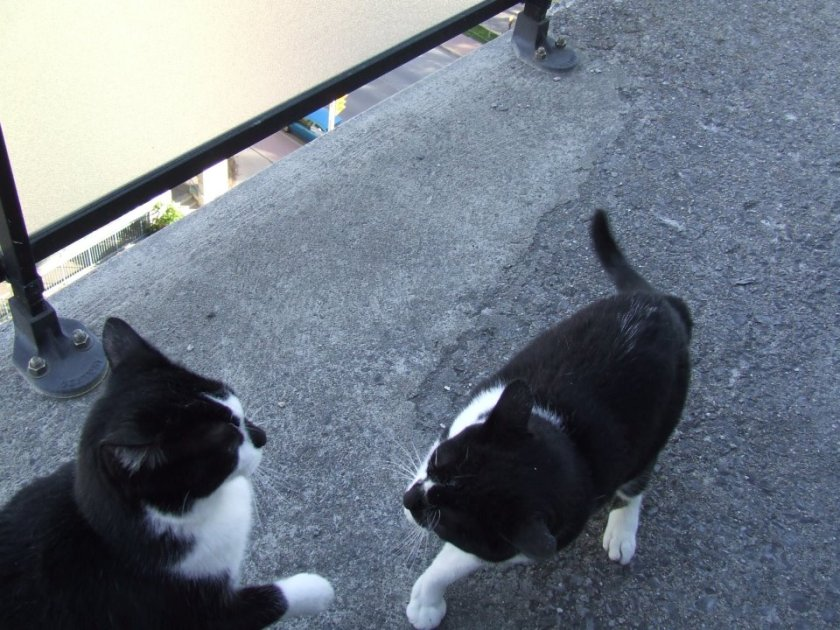 Brothers having a bit of a disagreement. No one got hurt. Just a few swats. Cats! Gotta love how they resolve issues! No litigation here!