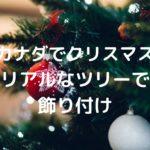 【カナダでクリスマス】本物のモミの木で飾り付けされるクリスマスツリーについて