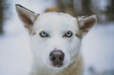 LOCATION: DRYDEN - BOREALIS DOG SLED ADVENTURE