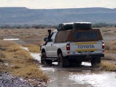 16.muddytracks.jpg