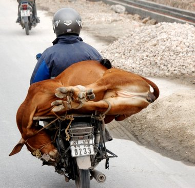 All you've got to add is a methane capture system, and you'd have a motorbike that would never run out of gas.